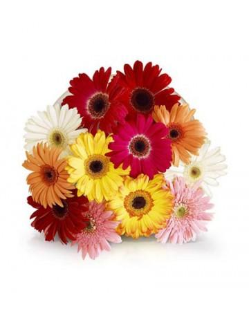 Mixed Colour Gerbera Bouquet