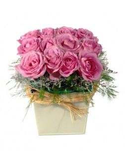 Rows of Pink Roses in a Square Pot