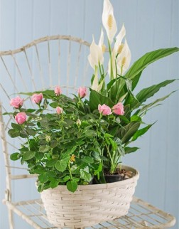 Assorted Plant Basket